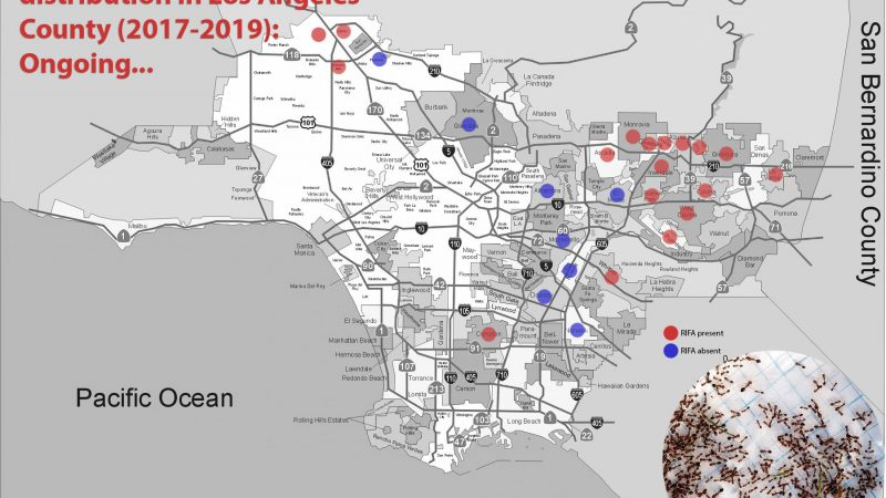 Rred Imported Fire Ant (RIFA) distribution in Los Angeles County. Map modified from Los Angeles Almanac's ™ map of the County of Los Angeles.